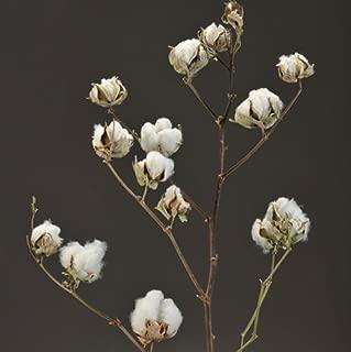 Real Cotton Stalks 26''