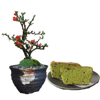 母の日 ミニ盆栽 天然石の敷物付き ギフト お花の盆栽とお菓子のギフトセット