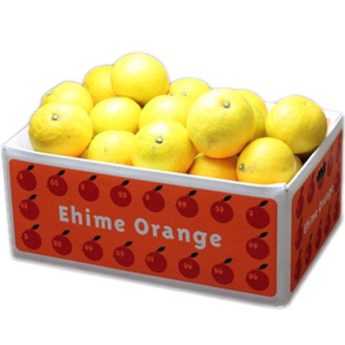 「訳あり小夏5×2」訳あり愛媛ニューサマーオレンジ(小夏)10kg(5kg×2箱) フルーツ 果物 通販