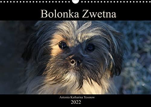 Bolonka Zwetna 2022 (Wandkalender 2022 DIN A3 quer)