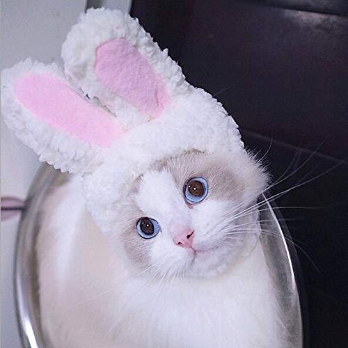Galapara Hoofdbedekking voor huisdieren, 2 stuks, zachte haarband met zoete hazenoren, paaszoete konijnen, pluche kop, accessoires, hoed hazenoren voor katten, accessoire voor Halloween, Kerstmis, feest