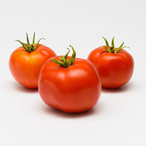 La semence BIO Graines de Tomate Saint-Pierre Bio