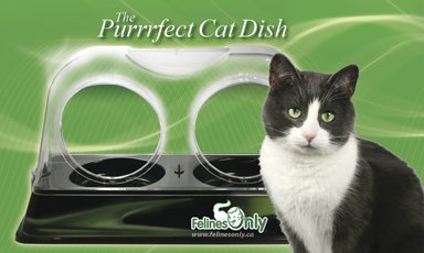 Felines Only - the Purrrfect Cat Dish