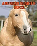 American Quarter Horse: Beautiful Pictures & Interesting Facts Children Book About American Quarter Horse