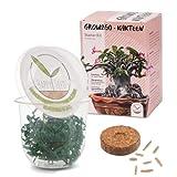 GROW2GO Cactus Starter Kit - Juego de plantación de mini-invernadero, semillas de cactus y tierra - idea de regalo sostenible para los amantes de las plantas (Adenium obesum)