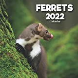 Ferrets Calendar 2022: A Monthly and Weekly 12 Months Calendar 2022 With Pictures of the Ferrets For Desk, Office to Write in Appointment, Birthday, ... Ideas For Men, Women, Girls, Boys in Bulk