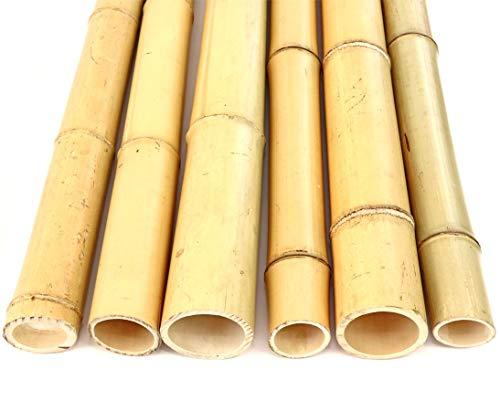 1x Bambusrohr Moso Bambus gelblich Gebleicht, Durch. 6,8-8cm, Länge 200cm - Bambus Superfaser aus der Natur