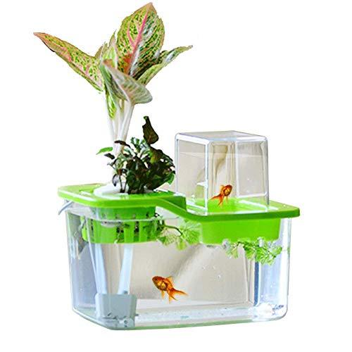 JIANGU Kleines Tischaquarium - EIN ökologisches Aquarium aus Acryl und Fisch und Pflanzen, 23 * 16 * 19 cm