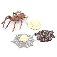 子供のための動物の成長サイクルモードシミュレーション(Spider growth cycle)