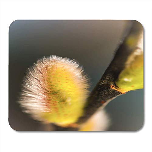 Mouse Pads Pussy Willow Pussycat Catkins Classic Beginning of The Spring in Nordic Countries This Flower is Favorite Mouse Pad for Notebooks,Desktop Computers Office Supplies