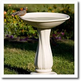 3dRose ht_206854_3 American Robin at Bird Bath Marion, Illinois, USA. Iron on Heat Transfer, 10 by 10