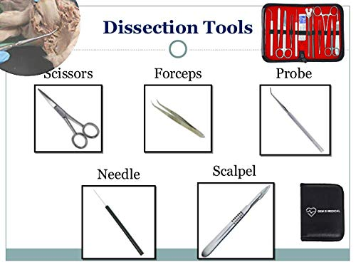commercial Set with 20 preparations and preparation equipment for advanced biological anatomy medical students … lab dissection kit