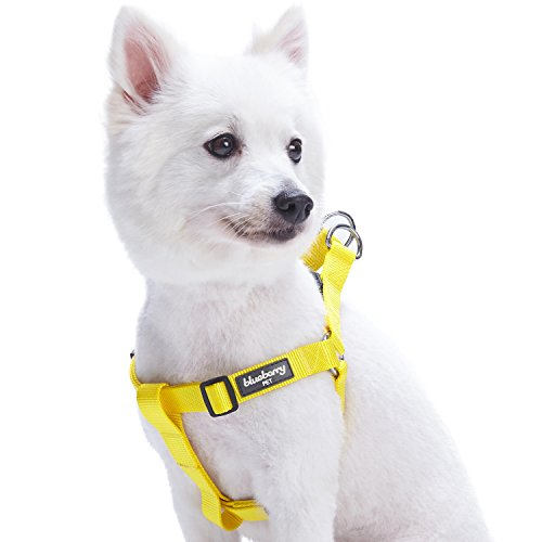 Blueberry Pet Essentials 21 Colors Step-in Classic Dog Harness, Chest Girth 16.5' - 21.5', Blazing Yellow, Small, Adjustable Harnesses for Dogs