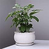 Kioiien Hermosas macetas Cerámica jarnejado rociador orquídea verde luo flor macetas blanco minimalista estilo redondo grande suculento planta macetas bonsai pots cilindro plantador de mesa oficina de