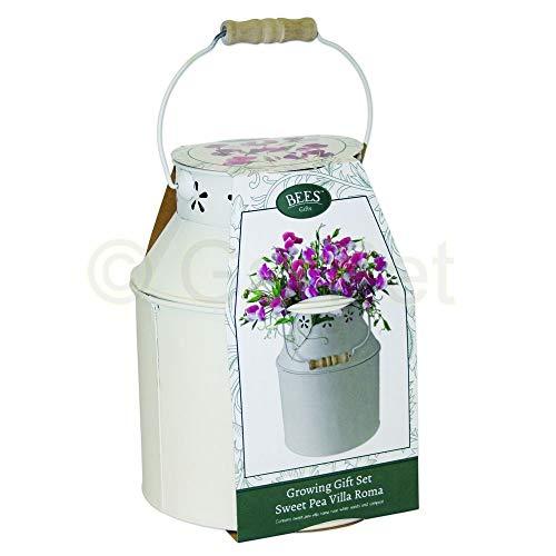 BEES Geschenk Set Edelwicke Milchkanne Blumen Samen komplett Saatgut Pflanzerde Dünger