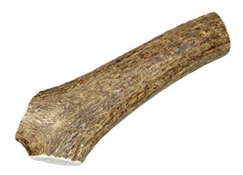 Elkhorn Premium Chews - Large Whole (for 35-65 lb Dogs) Premium Grade Elk Antler Dog Bone - Single Pack (1 Piece) - Long Lasting Chew Toy from Natural Shed Elk Antlers Sourced in The USA