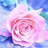 Cuadro de diamantes de flores flor de piedra redonda completa bordado de diamantes cuadro de diamantes de imitación de rosas pintura de mosaico A9 45x45cm