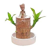 ラッキーウッドの植物ブラジルの木水耕植物の植物の切り株、オフィスのデスクトップの装飾のためのきれいな空気のミニの木製の植物鍋,Gh3