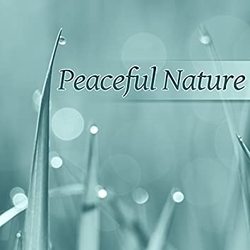 Peaceful Nature – Calm Sounds of Nature, Pure Life and Relaxation Moments