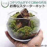 コケのインテリア コケリウム 栽培キット