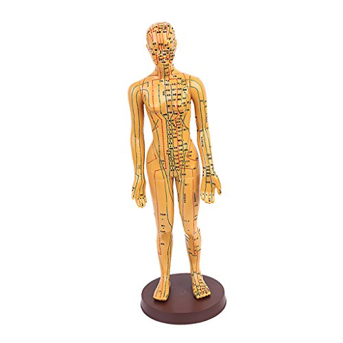 Jili Online 1pc 20'' Male/Female Human Body Acupuncture Model - Pressure Point and Meridians - Female 2