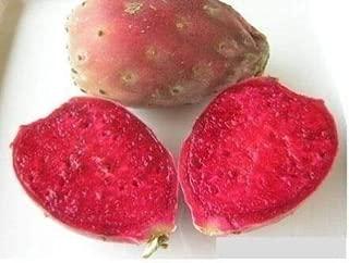 Best dwarf prickly pear cactus Reviews