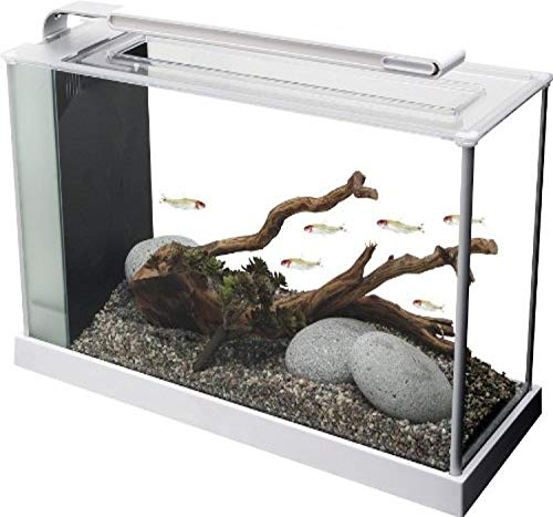 Fluval Spec V Nano Tank Fish Kit