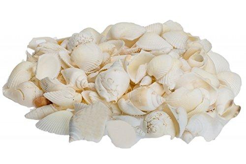 NaDeco® Muschelmix groß 1kgMuscheln und Schnecken im mixDeko Muscheln zum