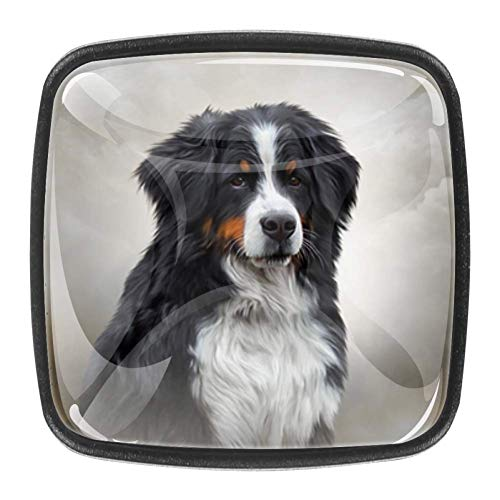 Berner Sennenhund Art Drawer Knob Türgriff 4PCS mit Schrauben für zu Hause
