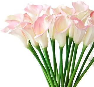 Floral Kingdom 25