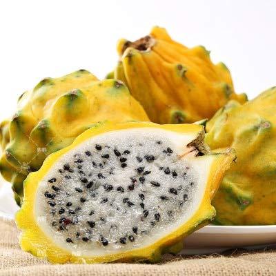 100 stuks snoepjes Pitaya bonsai Organic Bonsaiplanten Fruit Anti-aging NON-GMO White Dragon Fruit bonsai Veel soorten: 2