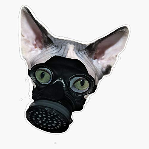 CNW Studio Cat Wearing mask. Coronavirus cat Apocalypse. Cat mask, Covering All or Part of The face Vinyl Decal Wall Laptop Car Bumper Sticker 5'