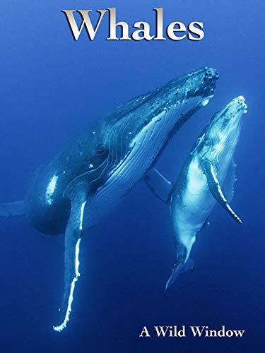 Whales [OV]