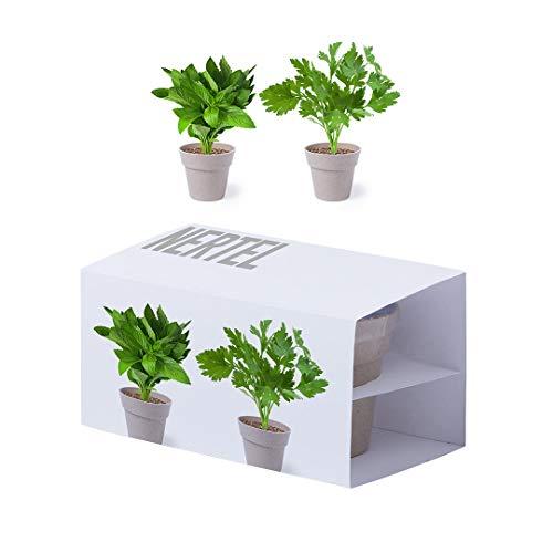 Set met 20 zwarte plantenpotten. Set van 2 plantenpotten met munt- en peteraccessoires in bloempot uit de natuurlijn. Met zak groeisubstraat.