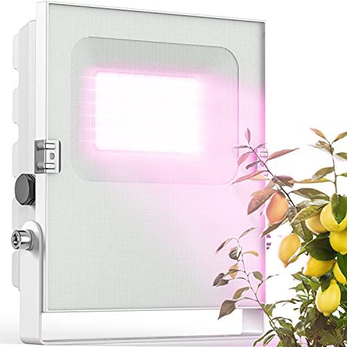 Meine Orangerie - LED Pflanzenlampe zur Überwinterung von mediterranen Pflanzen - Entwickelt mit den Zitruspflanzen-Profis von Meine Orangerie - Vollspektrum Pflanzenlicht (50)