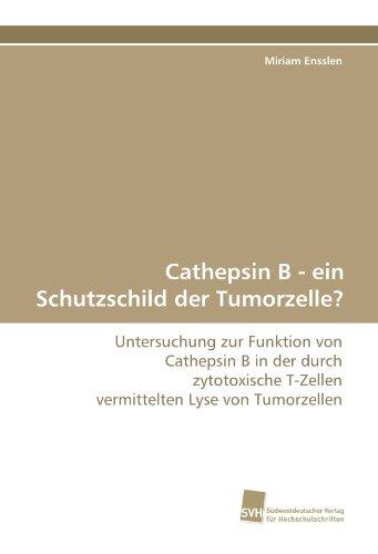 Cathepsin B - ein Schutzschild der Tumorzelle?: Untersuchung zur Funktion von Cathepsin B in der durch zytotoxische T-Zellen vermittelten Lyse von Tumorzellen