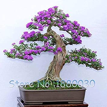 100PCS Belles 9 couleurs différentes bonsaï japonais en pot lilas graines de fleurs maison de bricolage jardin