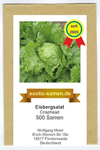 Eisbergsalat - Crisphead (500 Samen)