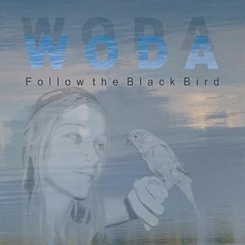 Follow the Black Bird
