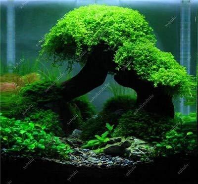 Hot verkoop van 500 stuks Nieuwe Water Aquarium Grass Bonsai Water Aquatic Plant Bonsai Family makkelijke plant Bonsai voor versieren Aquatic: 12