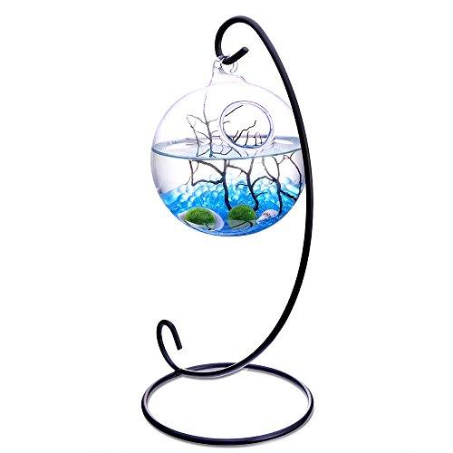 2 Marimo Balls Sky Blue Glass Pebble Little Fan Coral in 3.5