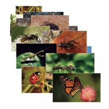 Stages Learning Materials Insects 14 Poster Cards by