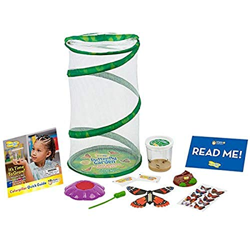Insect Lore Butterfly Mini Garden Gift Set with Live Cup of...