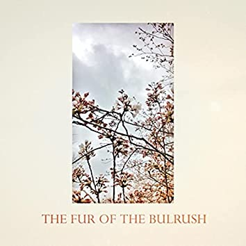 The Fur of the Bulrush