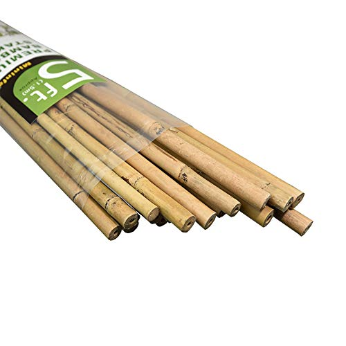 1000 bamboo stakes - 3