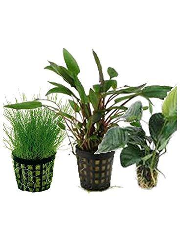 Assortimento primo piano (3 piante)