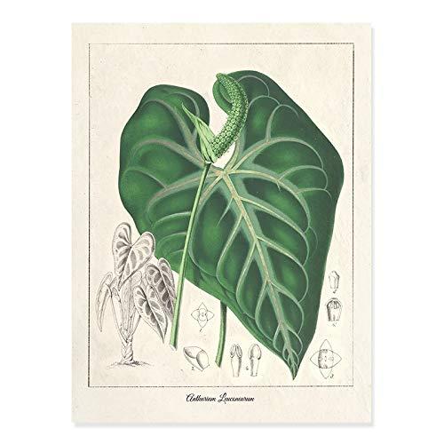 Vintage alerce planta hojas beige pared arte lienzo pintura imagen cartel sala de estar hogar sin marco lienzo decorativo pintura C 70x100cm