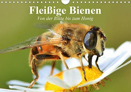 Fleißige Bienen. Von der Blüte bis zum Honig (Wandkalender 2021 DIN A4 quer)