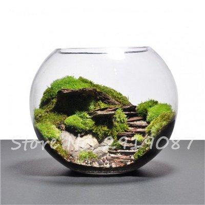 100 Pcs rares mousse verte Graines exotiques Graines Bonsai Moss Belle Moss Boule décorative Jardin créatif herbe Graines Plante en pot 16