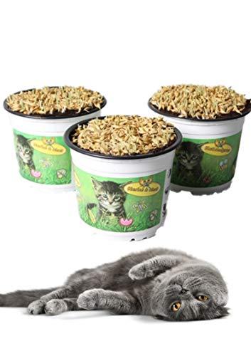 Zoo-Papp 3 Stück Premium Katzengras Samen mit Erde und Topf Ø 12 cm | Leckereien für Katzen Gras Pflanze Katzengras Topf Cat Grass
